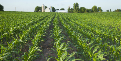 Ensuring the future of food production: Uncovering sustainability in rural America places - Root360